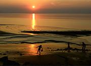 美景在身边 夏日黄家埠镇的海涂