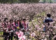 """三月宁波开启""""花见""""盛宴 来一场春日里的约会吧"""