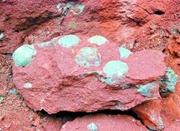 施工队闹市修路发现43枚恐龙蛋化石