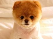 因爱犬被称狗 男子刺伤路人