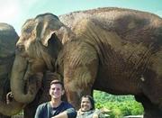 被奴役80年!泰国这头大象若没获救将工作到死