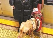 盲人携导盲犬出行遭遇乘车难 乘坐公交遭阻拦