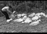 宁海森林公安在上林村放生眼镜蛇?山民吓势势