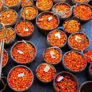 余姚大岚村的柿子熟了吗