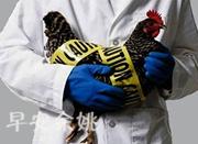出门旅行带回两只活鸡 大伯4天后确诊H7N9禽流感
