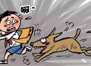 """济南试点""""养犬积分制"""":扣满12分""""吊销""""狗证"""