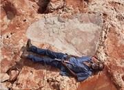 澳西北部发现世界最大恐龙足迹 与成人身高相当