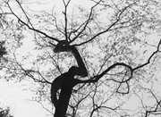 朋友圈热传四明山有片桃林树龄800年 许多网友质疑
