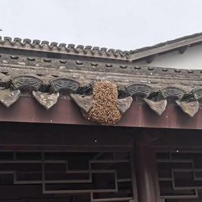 陽明先生家門口的蜂窩找誰捅一下